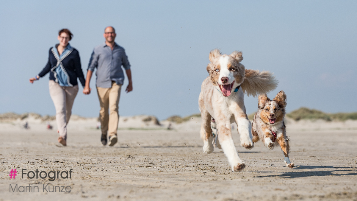 Fotoshooting in St Peter Ording mit Hunden